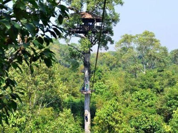 Flight of the Gibbon